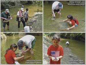four images of fossil hunters at a past Shark Tooth Creek excursion